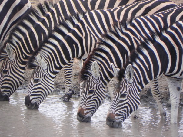 Africa Okavanga Delta