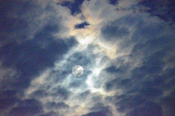 Miami Moon.