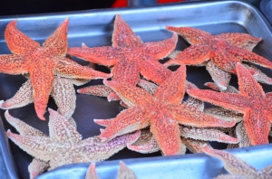 Starfish are just one of the delicacies at the Wangfujing Night Market.
