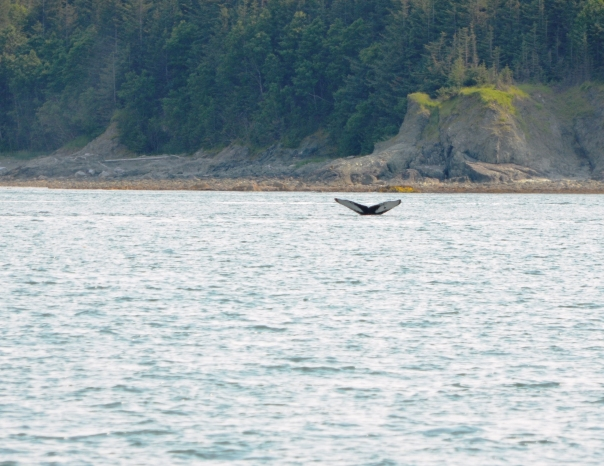 """Look closely - meet """"Spot"""" the Humpback whale."""