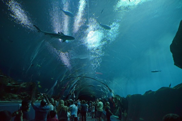 "The 100 foot ""undersea""  acrylic tunnel featured in the Ocean Voyager exhibit."