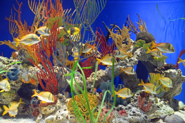 A Pacific coral reef in one of the worlds largest living tropical reef exhibits.