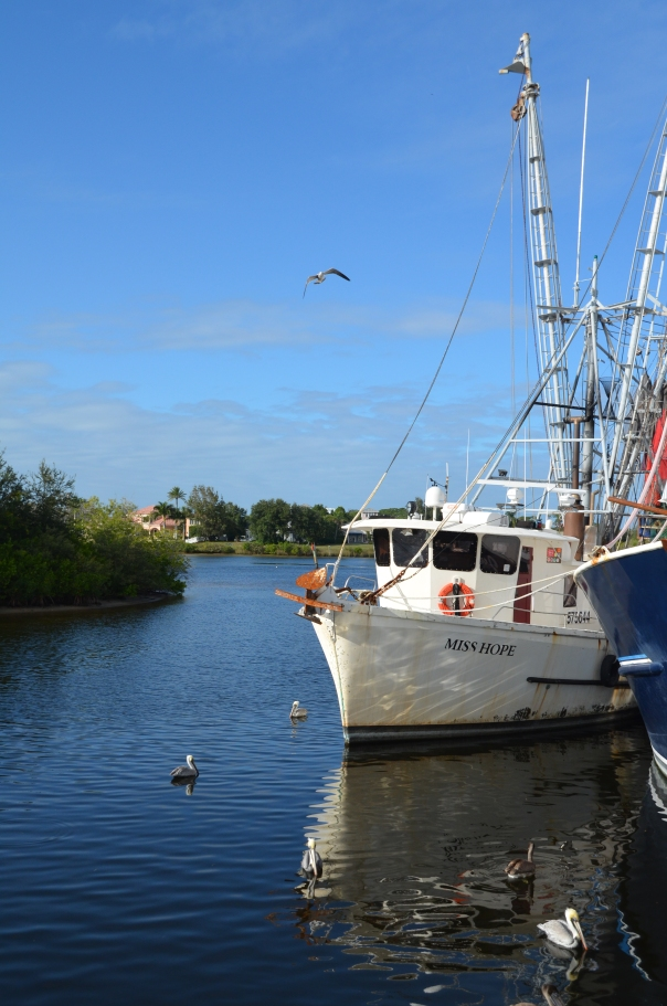 Pelicans wait for handouts by the commercial docks of this Greek community.  Tarpon Springs is located just north of Tampa Bay.