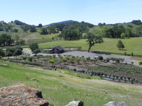 View of farms at the Jordan Winery.