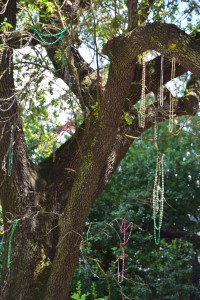 Mardi Gras was three months ago, but they say they have better things to do than get the beads out of the trees.
