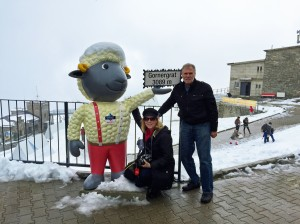 "At Gornergrat with ""Wolli"" an adventurous black-nosed sheep who is the mascot of Zermatt."