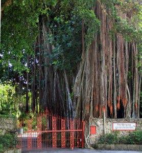 The-Kampong