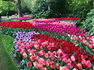 Beautiful Keukenhof Gardens