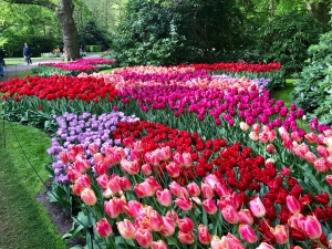 Beautiful Keukenhof Gardens