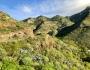 Santa Cruz de Tenerife: Island of MajesticContrasts